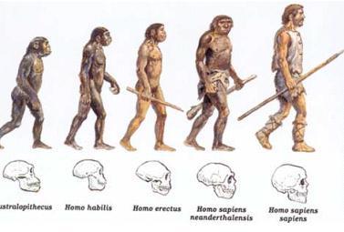 1_human_evolution